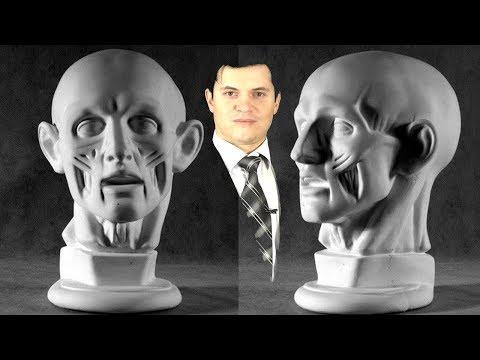 Портрет карандашом ► пропорции, анатомия для художников