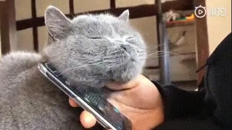 кот и смартфон