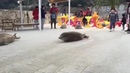 How seals move on land Create Discover and Share Awesome GIFs on Gfycat