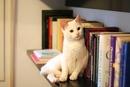 — Когда на кресле тебя ждёт кот, а на тумбочке — книга, ты вернёшься домой сквозь ураганы…