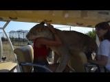 ЭТО НАДО ВИДЕТЬ ! Львица Лола катается с Олегом Алексеевичем на машине !