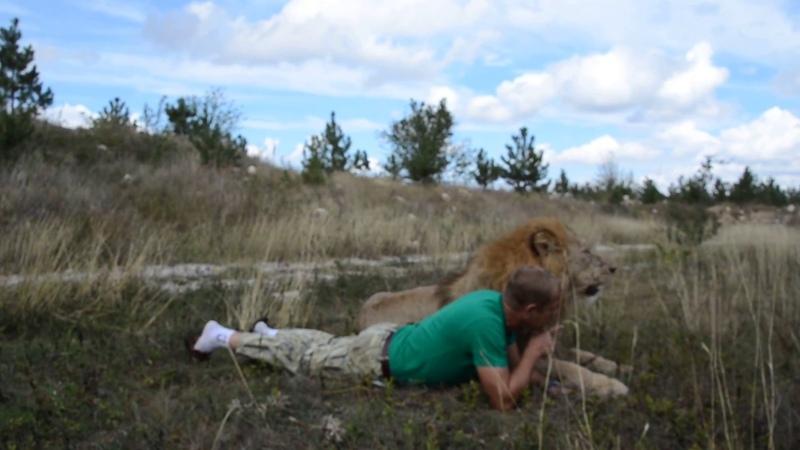 Сокращение популяции львов в Мире с 500 000 до 16 000 !