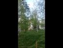 Березовый шум в Парке Зарядье