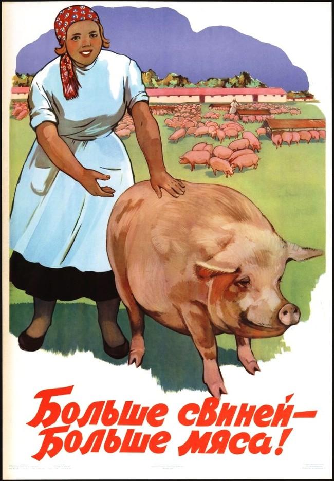 Свинский агитпроп