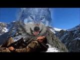 Волчица Т Тишинская