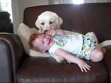 Малыш играет с собакой и ухахатывается