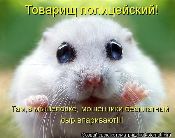 Смешные коты  фото с надписями  Шмяндексру