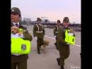 Щенки полицейские в Чили