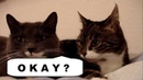 The Two Talking Cats - TRANSLATION