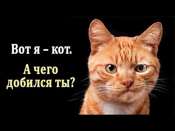 Кошки Интересные Факты про Кошек Что Нужно Знать о Кошках