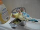 Рита хочет включить воду