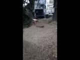 Фура в Сочи съехала с дороги и снесла деревья