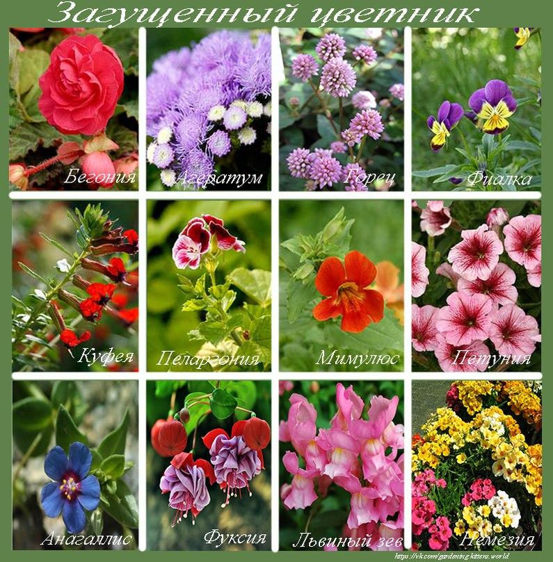 Цветы, переносящие загущенные посадки