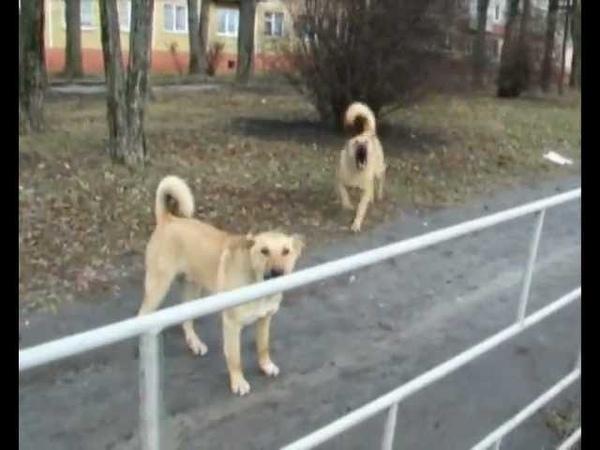 Агресивні собаки у Тернополі