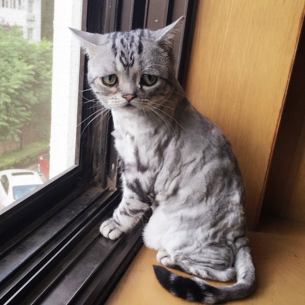 Самая грустная кошка интернета