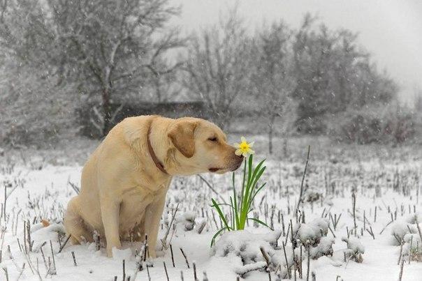 Весна рядом:)