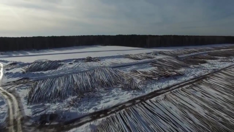 Дмитрий ПОТАПЕНКО - Вырубка лесов и осушение земель китайцами в Сибири. Обогащение китайцев - НОВЫЕ ОЛИГАРХИ.