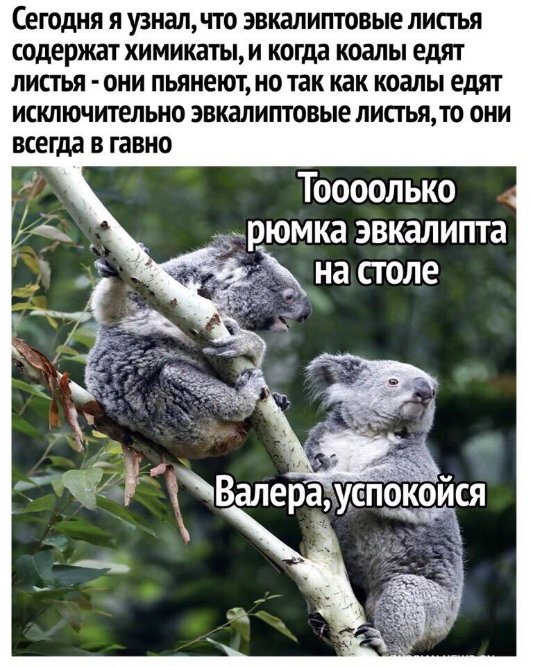 8REVXwr1z4k - Удачного дня, Волгоградцы!