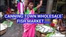CANNING SUNDARBAN WHOLESALE FISH MARKET | FISH MARKET IN SOUTH 24 PARGANAS, WEST BENGAL, INDIA