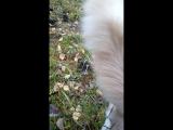 Кузьма мешает Валдису собирать грибы