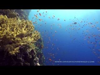 Red Sea Diving HD / Дайвинг в Красном море