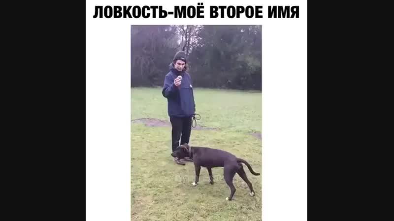 Самый неуклюжий собакен
