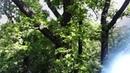Шипов лес с высоты птичьего полета