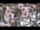 МЫ ВЕРНУЛИСЬ! Ольга Дубова поёт о Крымской весне-2014