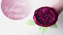 Английская роза из гофрированной бумаги | Мастер-класс! Роза Дэвида Остина из гофрированной бумаги