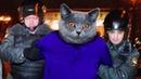 Кот украл 600 вещей у своих соседей! (Приколы с котами)