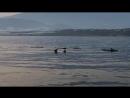 Delfines Akademia Ejido Spanish Spain Dolphins