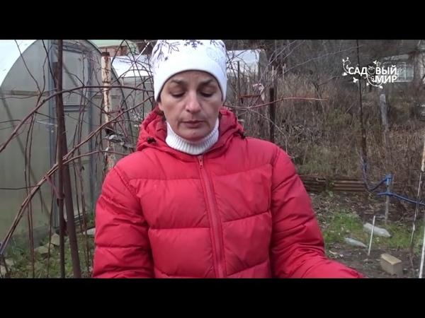 Болезни капусты Кила капусты и слизистый бактериоз Сайт Садовый мир