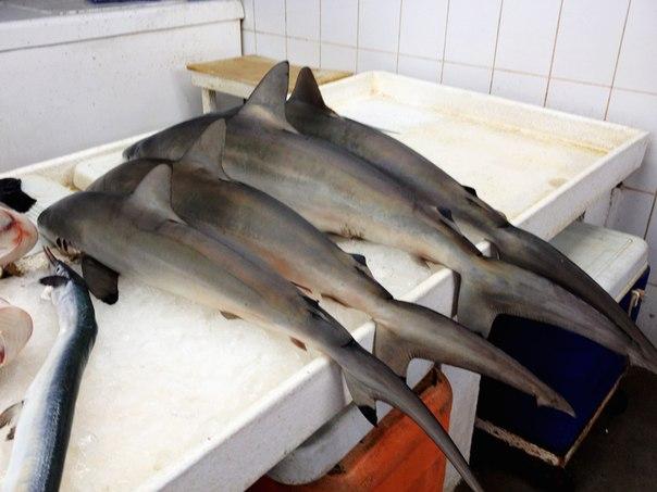 Купить акулу