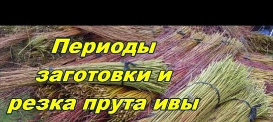 miniatyurnuyu-prut-foto-paren-izmenil-zhene-s-podrugoy-video