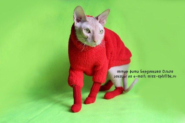 носки для кота