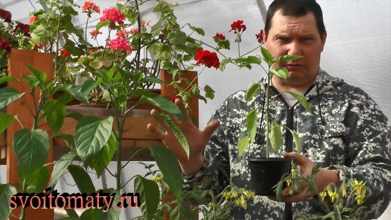 Рассада томатов и перцев Как ее качество зависит от объема грунта
