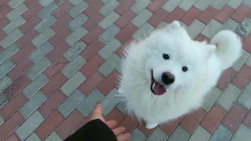 Я удивляюсь когда некоторые люди на улице с ужасом обходят меня стороной увидев собаку. Такие смешные вы) собакаубийца людоед