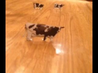 Невероятное видео. НЛО похищает коров / Shocking video UFO - cow abduction