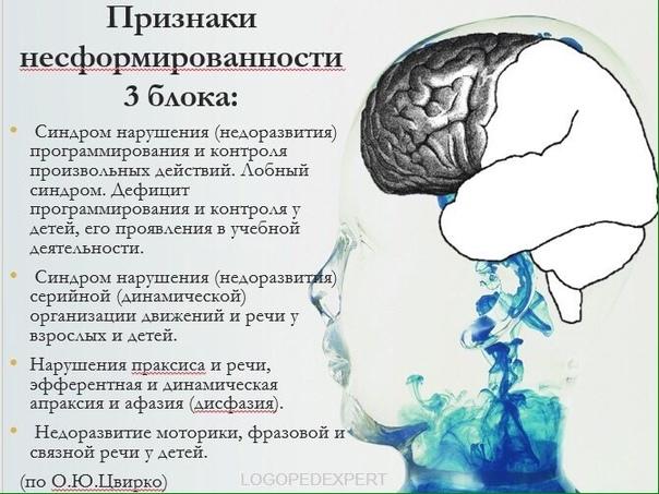 Теории и модели работы мозга работа по вемкам в красноармейск