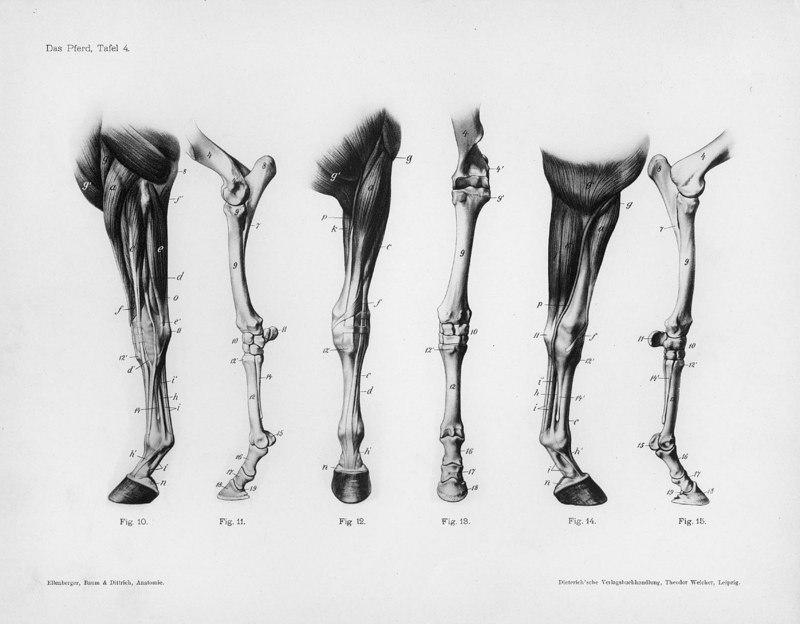 Evlao9pyx5qg 800624 Horse Anatomy Pinterest Horse