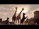 новинки трейлеры hd кино Король Лев тизер трейлер 6 YouTube