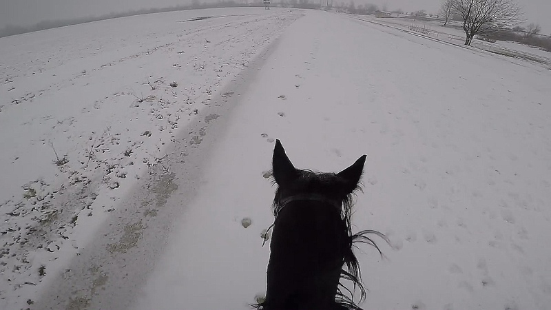 AWESOME winter FAST Galloping with Racehorse Oli | G.