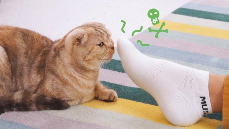 남집사의 발냄새 맡은 고양이들의 반응은