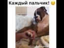 Animal_planet_vid_1_21092018_1257.mp4