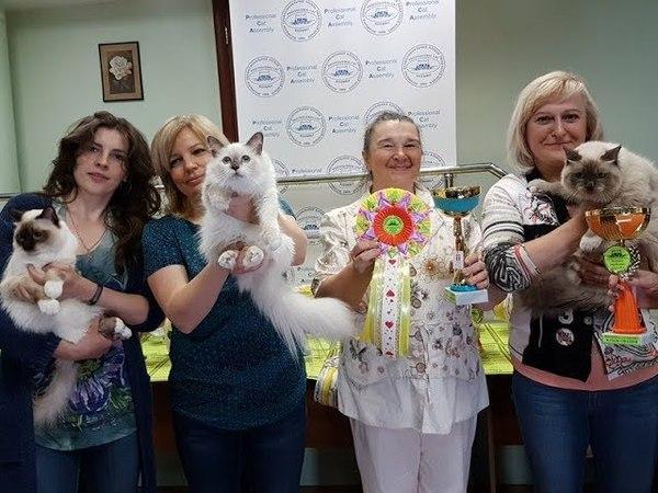 Презентация кошек системы PCA на Церемонии награждения 12.05.2018г