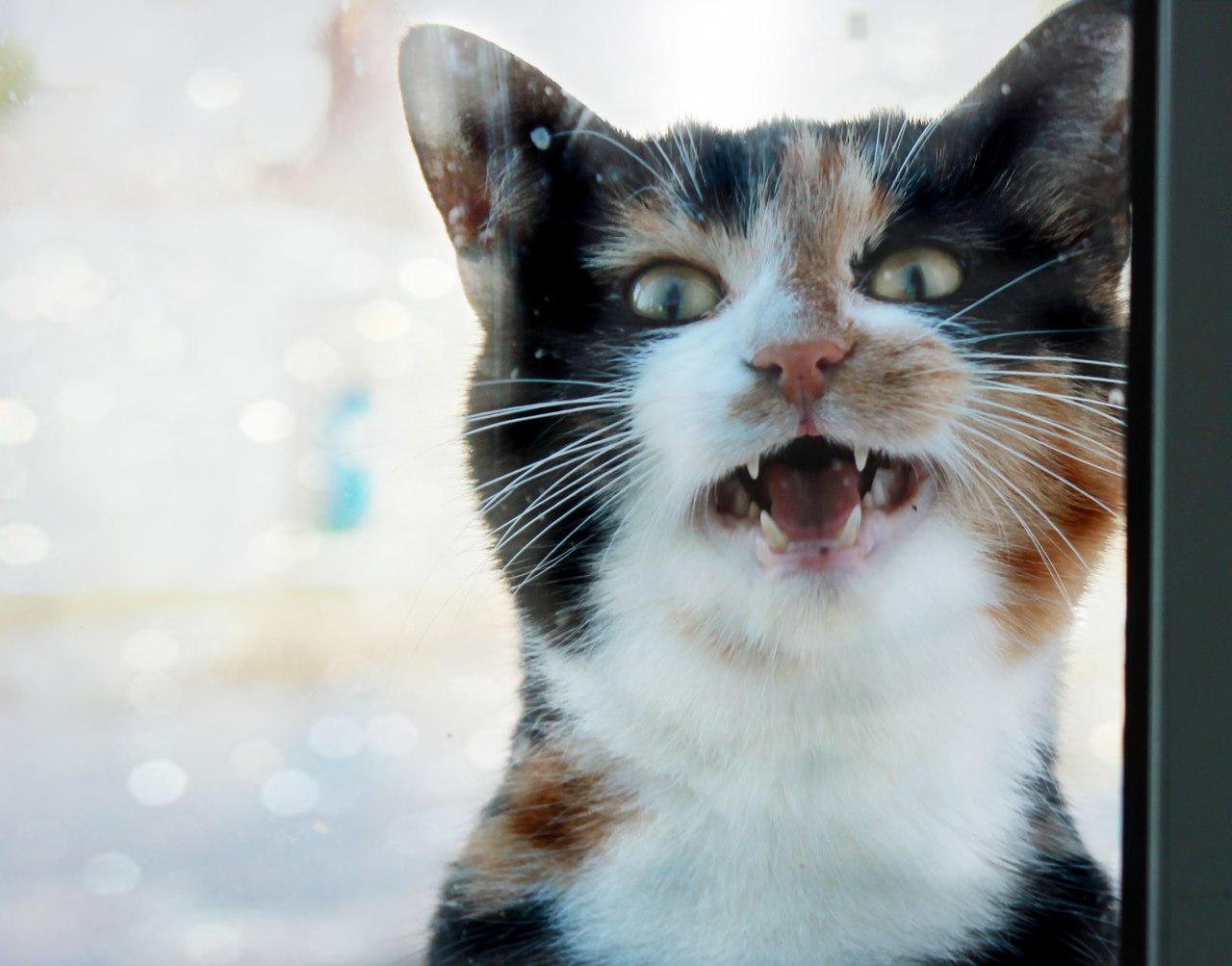 кошки мяукают только людям