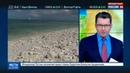 Новости на Россия 24 • Миллионер хочет построить на островах Кирибати альтернативную Россию