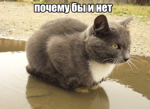 Кот благодарность