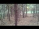 Без дороги через осенний лес.