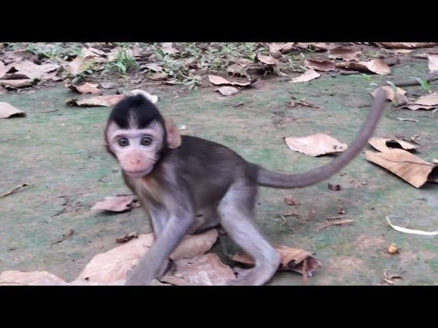 Cute Baby Monkey and Mommy Monkey With Other Monkeys, Monkeys 1084 Tube BBC